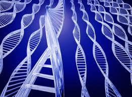 Muzeul Omului are  o sală de genetică, unică în România